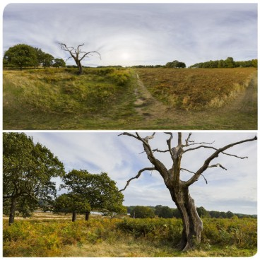 Dead Tree HDRI