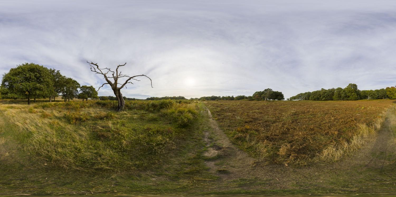 Dead Tree (30k) HDRI