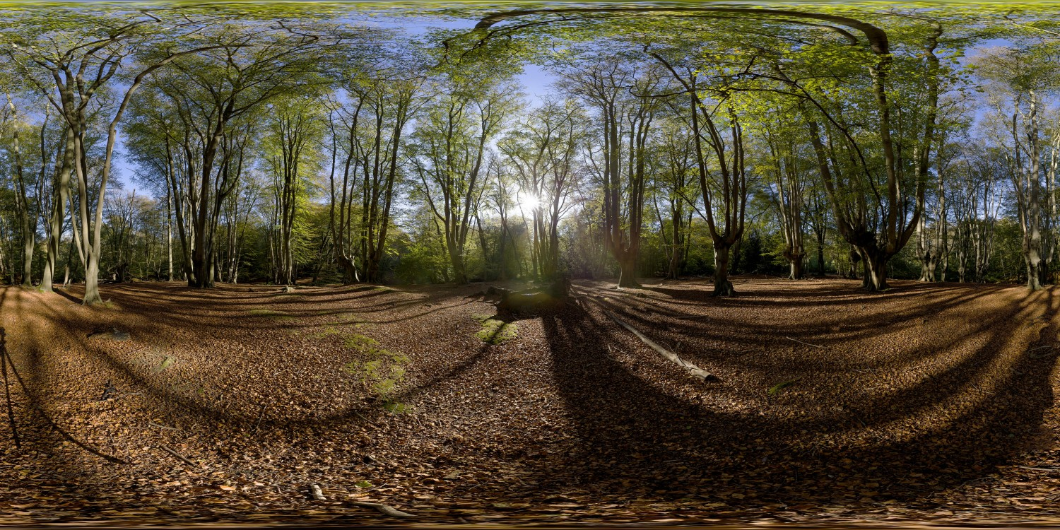 Epping Forest 2 (30k) HDRI