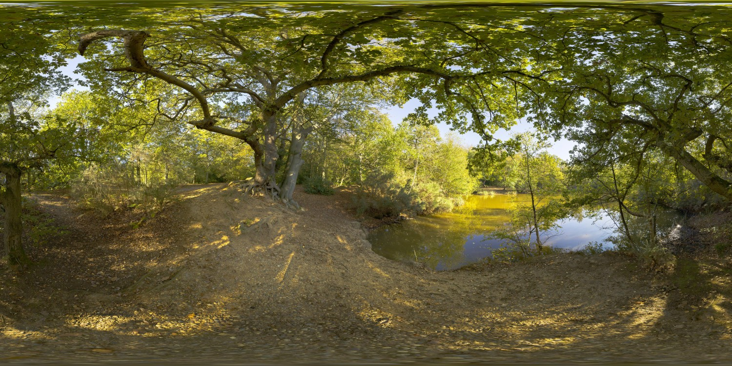 Epping Forest (30k) HDRI
