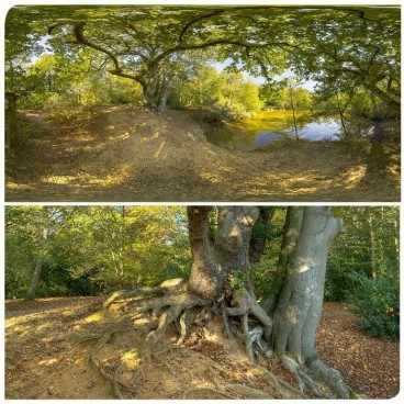 Epping Forest HDRI