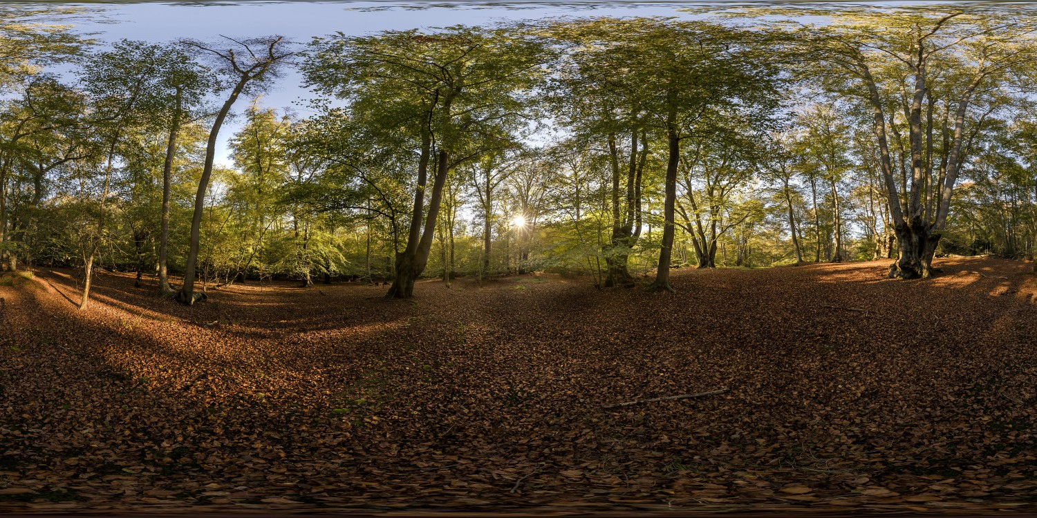 Epping Forest 4 (30k) HDRI