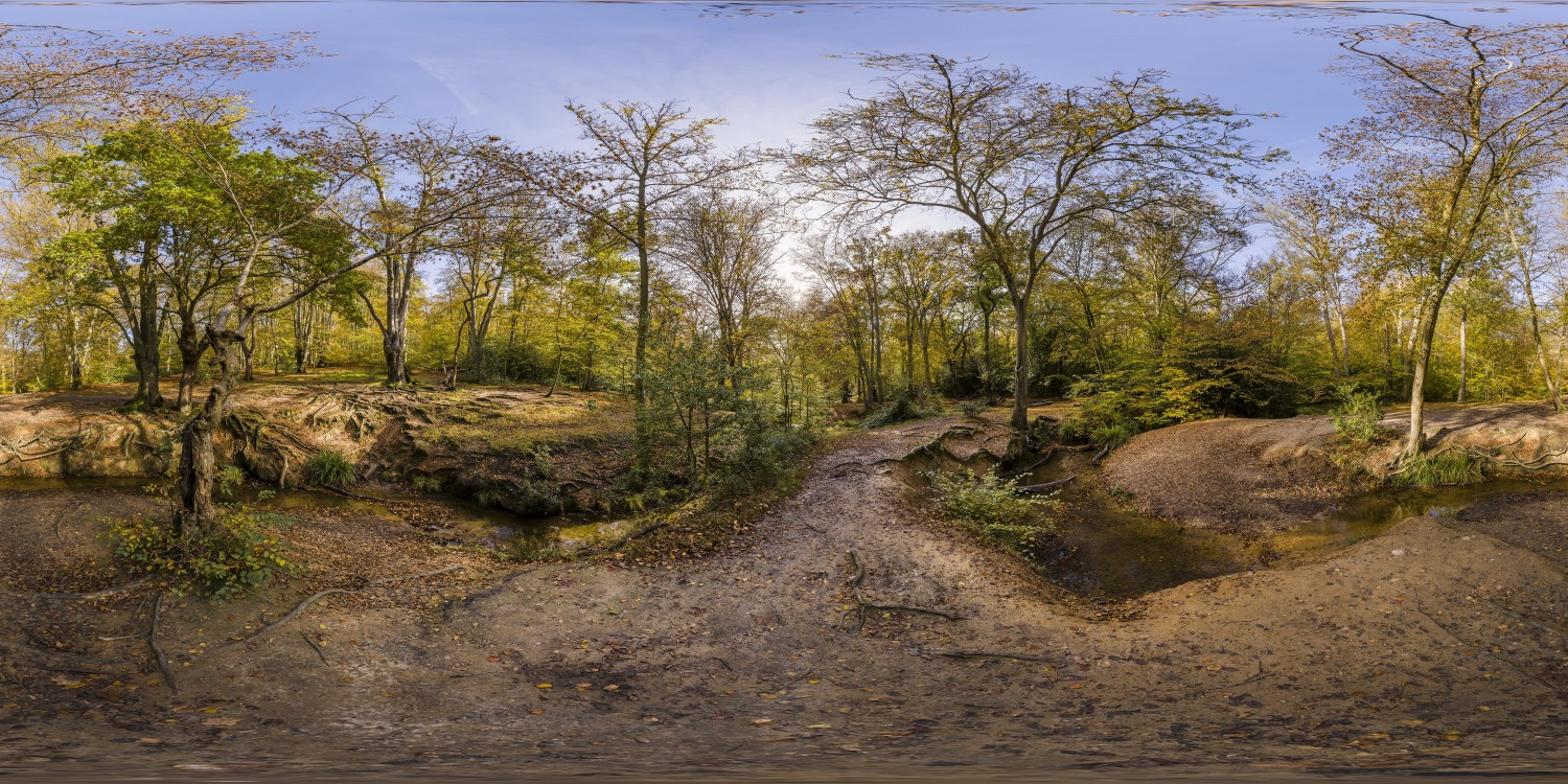 Epping Forest 5 (30k) HDRI
