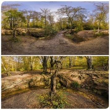 Epping Forest 5 HDRI