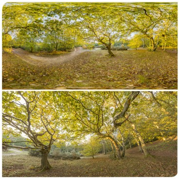 EPPING FOREST 65k