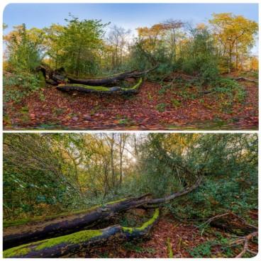 Epping Park 0453 (30k) HDRI Panoramas