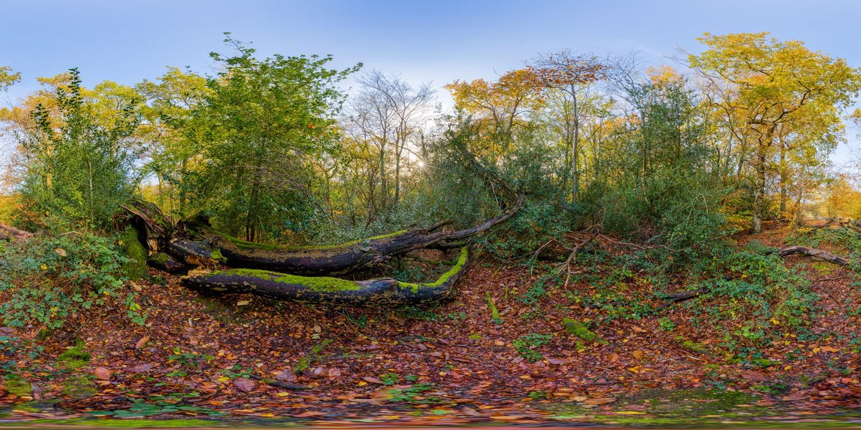 Epping Park 0453 (30k) HDRI
