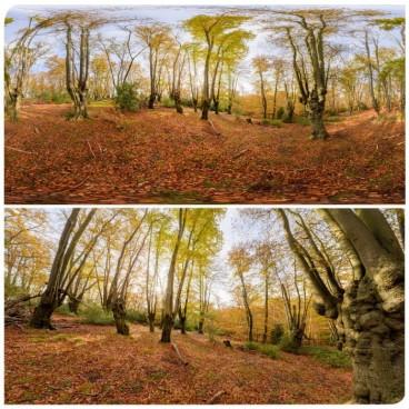 Epping Park 0803 (30k) HDRI Panoramas