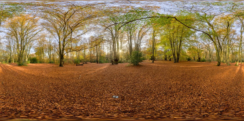 Epping Park 0993 (30k) HDRI