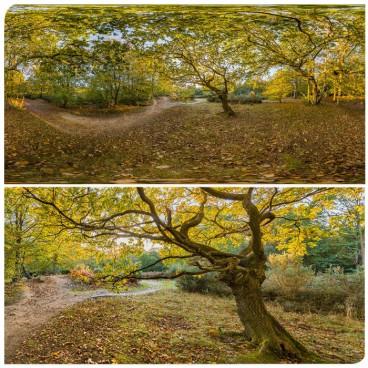 Forest I HDRI