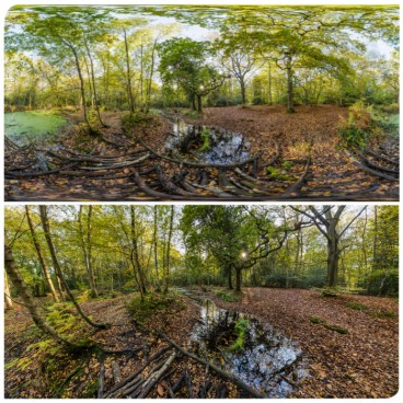 Forest Swamps HDRI
