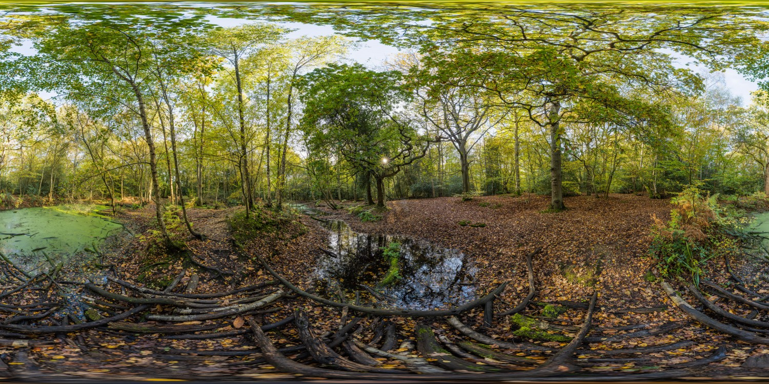 Forest Swamps (30k) HDRI