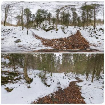 Winter Forest 3 HDRI