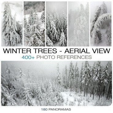 WINTER TREES AERIAL VIEW